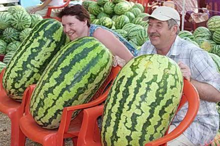 Анапчан приглашают посмотреть на ... арбузы