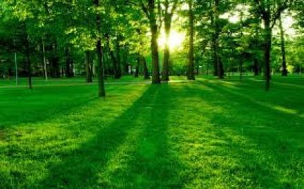 Вспомнили о деревьях.