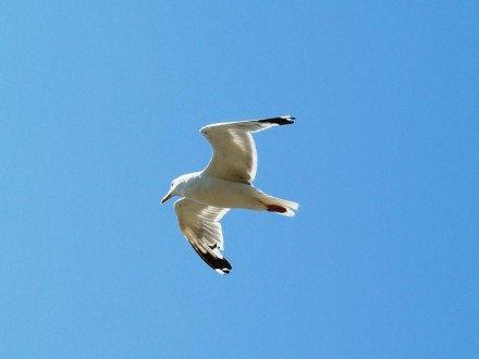 Анапа Сегодня: чайки, море, пляж