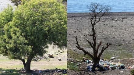 Было дерево...