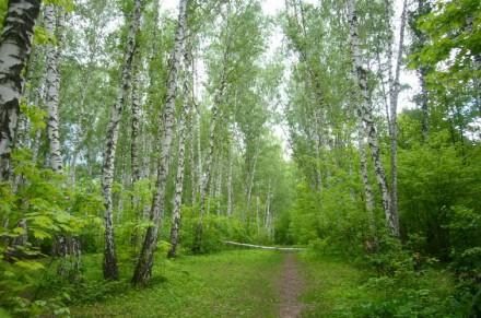 Праздник Леса в России.