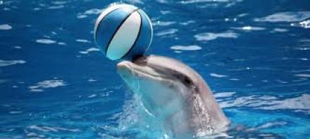 Дельфин все-таки умер.