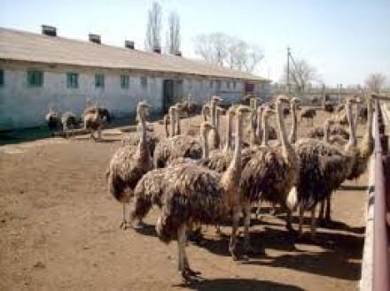 Какие экскурсии можно посетить в Анапе.